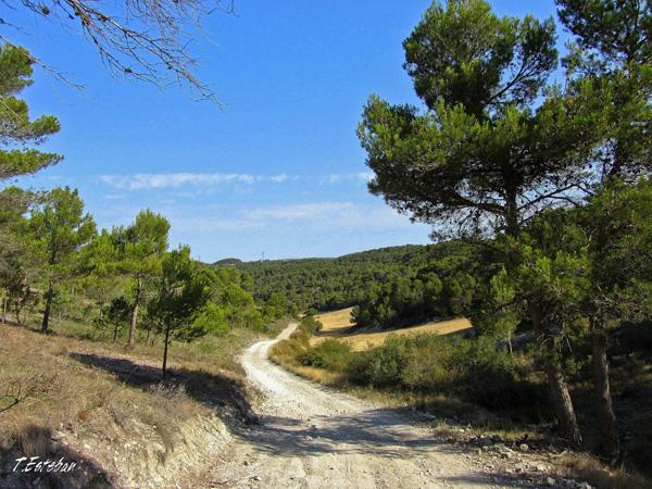 Camino visto desde la muga Castejón Zuera
