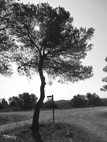 Cruce del camino con la muga Castejón Zuera