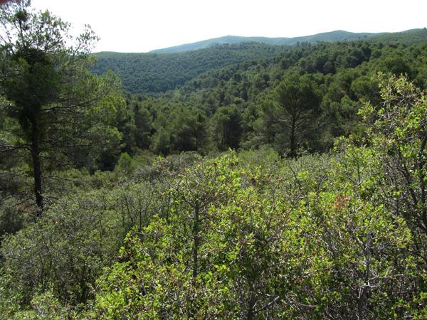 Vistas desde la muga Castejón Zuera