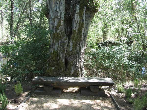 Rascafría. Banco junto a árbol para descansar