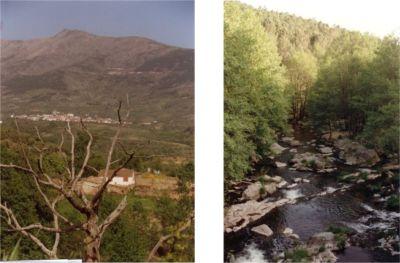 Detalles de la Sierra de Gredos