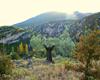Colores del otoño en la sierra de Guara