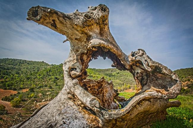 Henche. La Alcarria vista a través de un tronco seco.