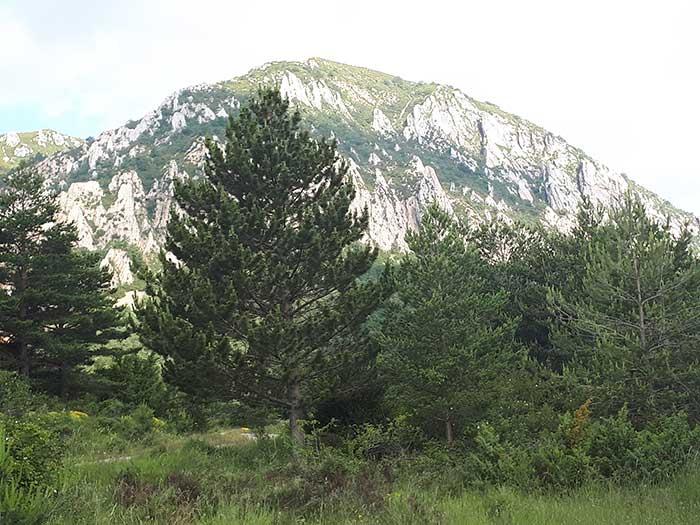 Pico Peiró desde la pista forestal
