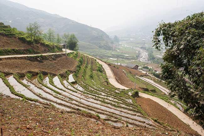 Camino y terrazas de arroz