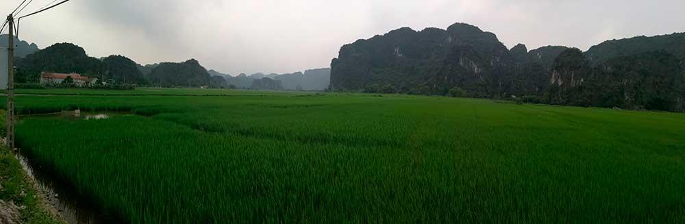 Panorámica de los arrozales de Tam Coc