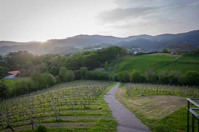 Viñedos y bosques de Bakio
