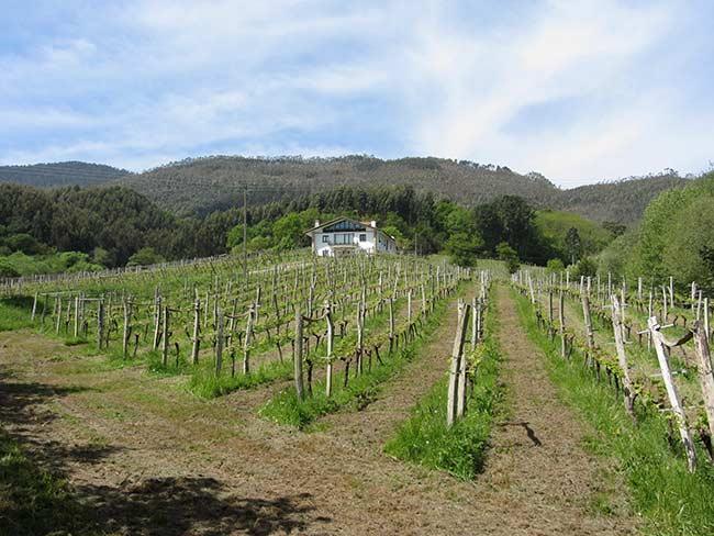 Casa Rural Basarte y viñedo